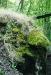 nagy-zoltan-hegyi-medve-kis